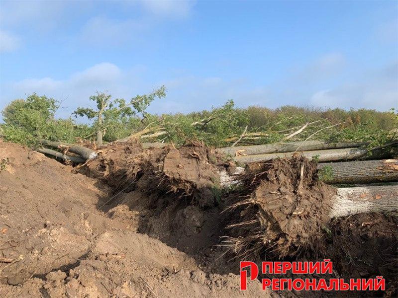 Хто відповість за знищені на Херсонщині дерева?