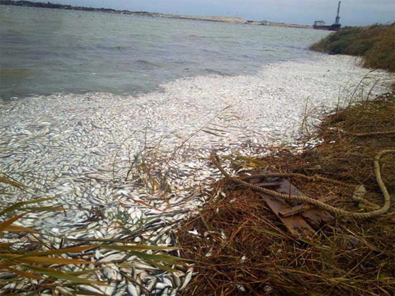 Масштабное экологическое бедствие на Херсонщине