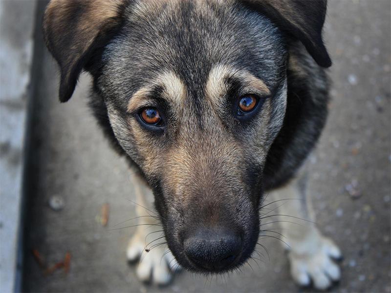 Приюта для бездомных животных в Олешках не будет