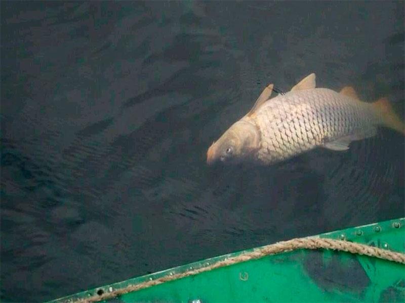 Загибель риби на Херсонщині: природне явище, виробництво чи диверсія?