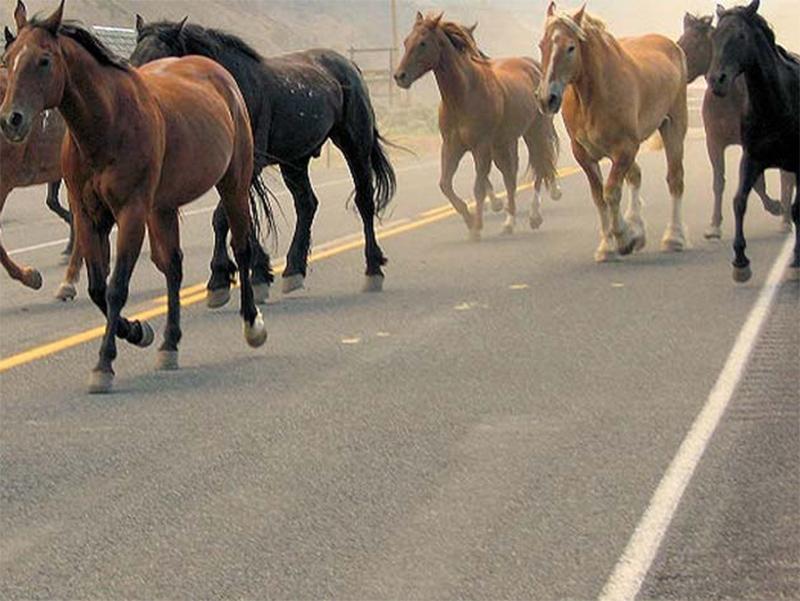 На Херсонщині дикі коні збили «залізного коня»