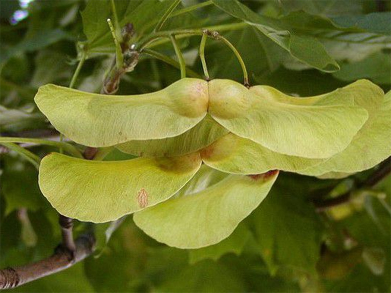 В Херсонской области вместо пустырей зазеленеют рощи