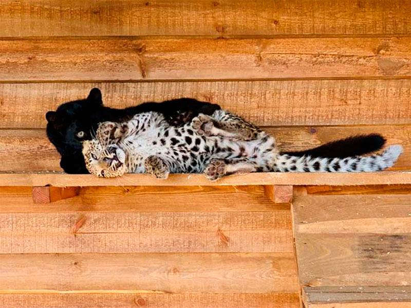 В Сафари-парке на Херсонщине влюбленные воссоединились