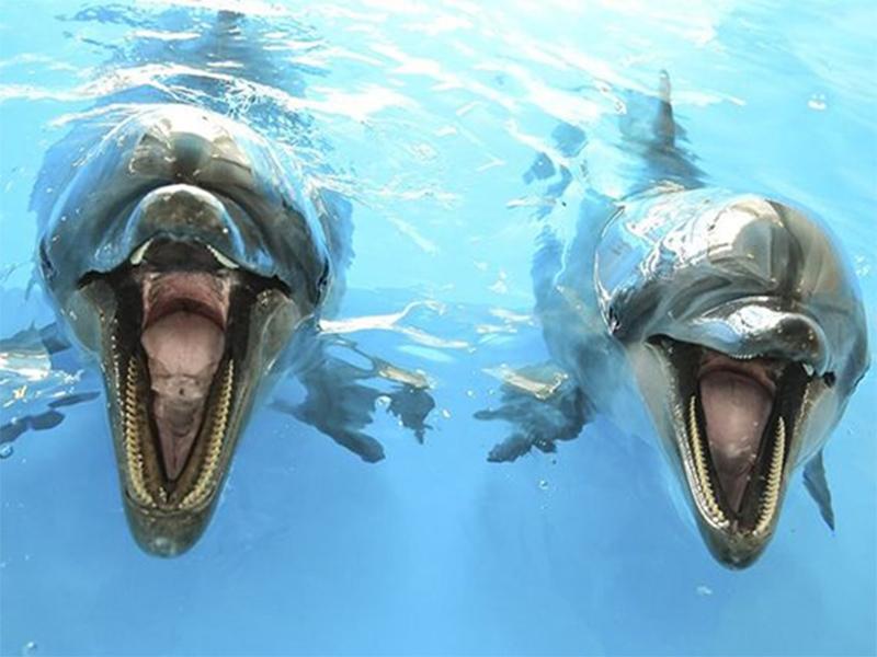 В Херсоне будут говорить о судьбе дельфинов