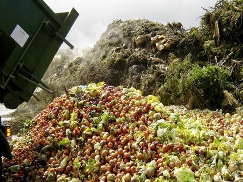 Почему на Херсонщине теряют четверть урожая овощей