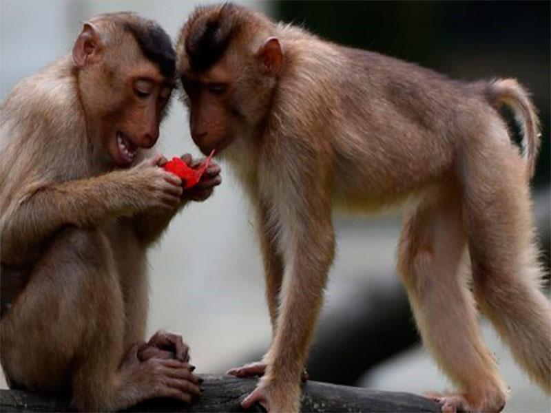 Романтические страсти кипят в Сафари-парке на Херсонщине