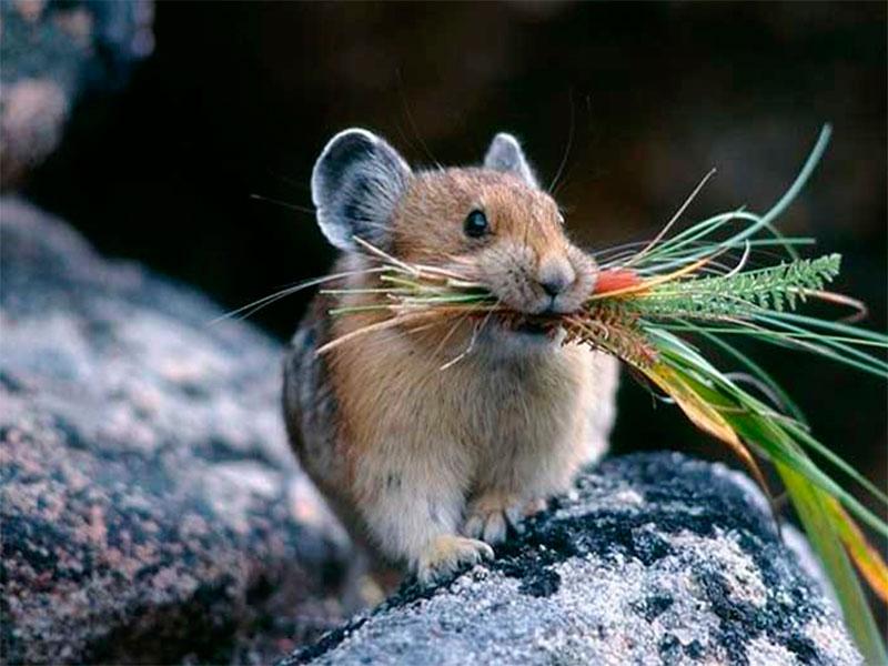 На Херсонщине тёплой зиме обрадовались мыши