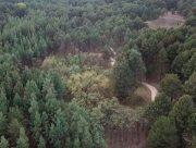 Як виживають лісгоспи Херсонщини