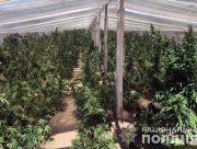 Житель Херсонщины получил 3 года лишения свободы за выращивание конопли