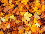 Какая погода ждет херсонцев в ноябре