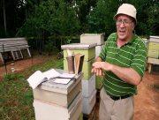 Херсонські бджоляри готують пасіки до зими