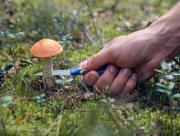 Каховчанин собирал грибы в городском парке