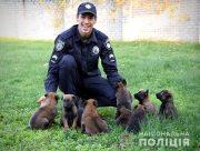У кінологічному центрі поліції Херсонщини проходять тренування нових чотирилапих слідопитів