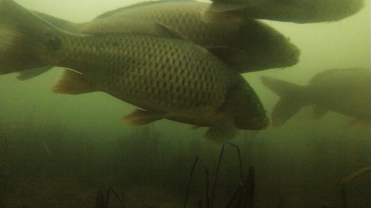 В Херсонской области запретили лов рыбы на зимовальных ямах