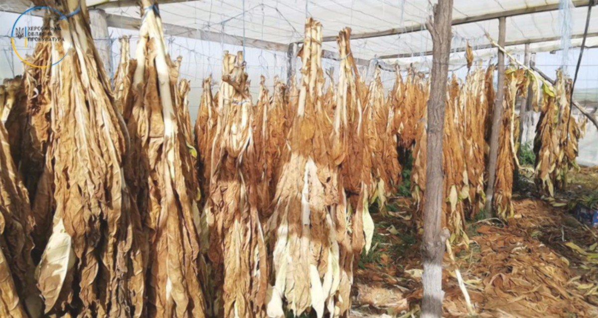 На Херсонщине прокуратура и фискалы обнаружили и прекратили незаконное производство табака в промышленных масштабах