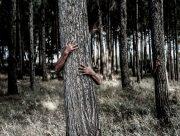 На Херсонщине грибы ищут на деревьях