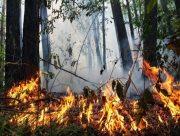 В Херсонській області зберігається високий рівень пожежної небезпеки
