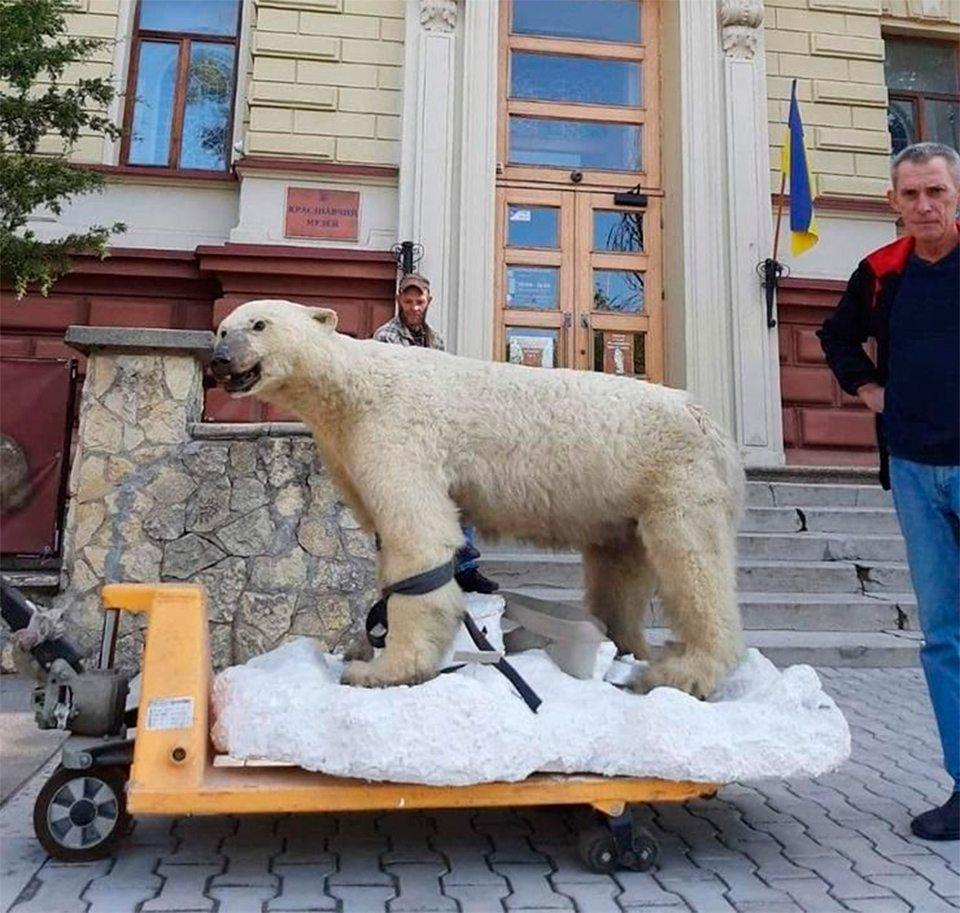 ведмедь, музей, перевезли
