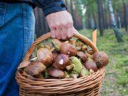 На Херсонщине начался сезон отравлений грибами