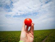 На Херсонщині фермери залишають врожай на полі