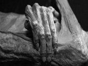 На Херсонщине в лесу нашли мумию