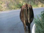 На Херсонщине мотоциклист протаранил корову