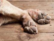 На Херсонщине пенсионерка казнила собаку на глазах ребенка