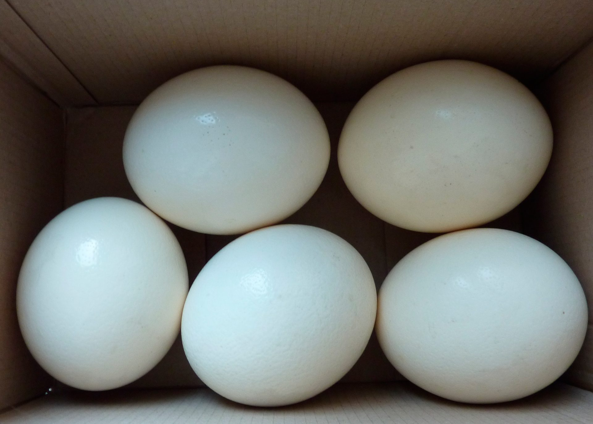 страусиные яйца, почта, доставка