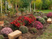 У Херсоні розцвіли ботанічні сади