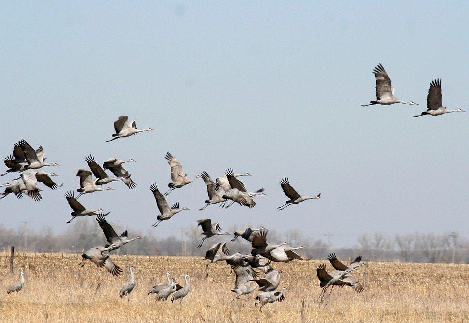 Херсонщина, птахи, міграція