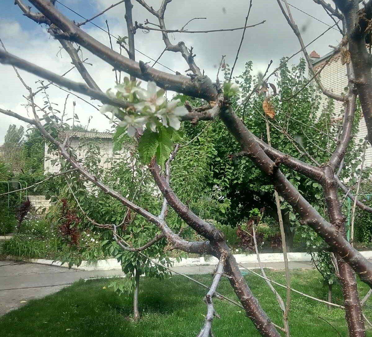 Херсонщина, вредители, сады