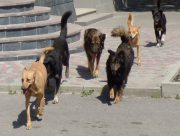 Куди у Херсоні вивозять безпритульних собак