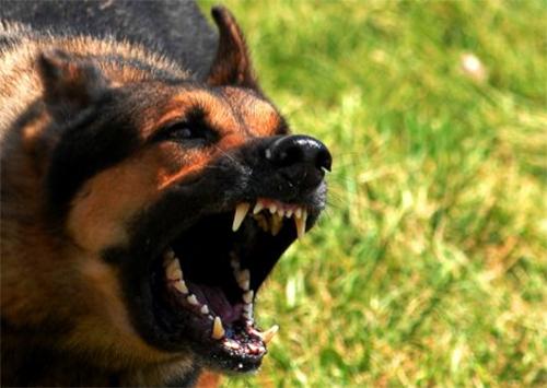 На Херсонщине бродячие собаки набросились на школьницу