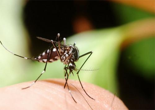 В Херсон занесли тропическую лихорадку