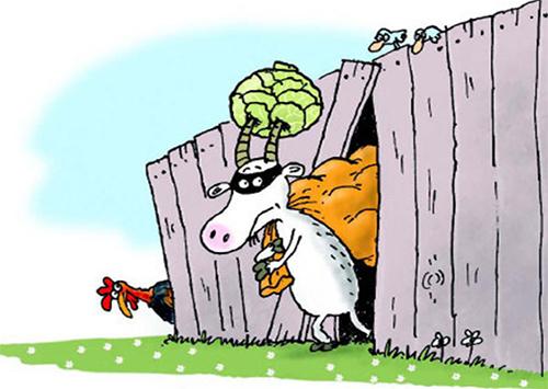 Урожай овощей на Херсонщине выгребают воры