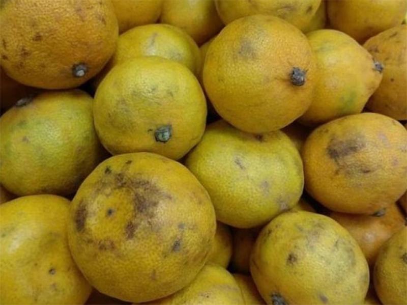 Супермаркет Херсона предлагает херсонцам цитрусы сомнительного качества