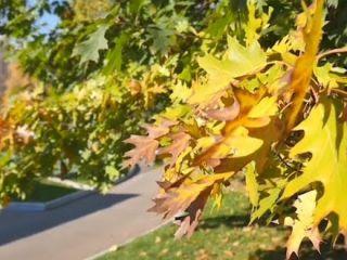 Чи позначиться аномально тепла осінь в Херсоні на погоду взимку?