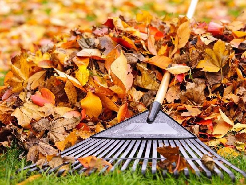 Не паліть, а компостуйте: що херсонцям робити з опалим листям