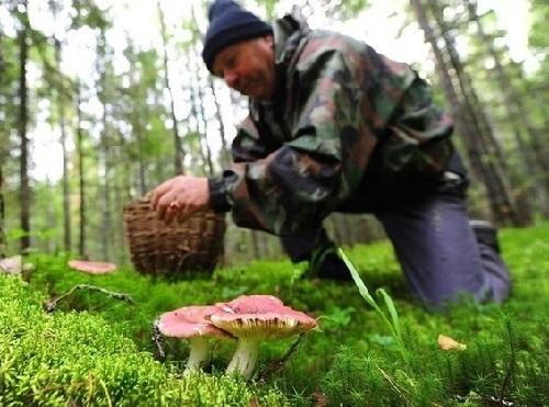 В Херсоне произошло очередное отравление грибами