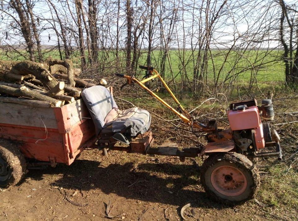 Двом жителям Каланчака загрожує кримінальна відповідальність за незаконну порубку дерев