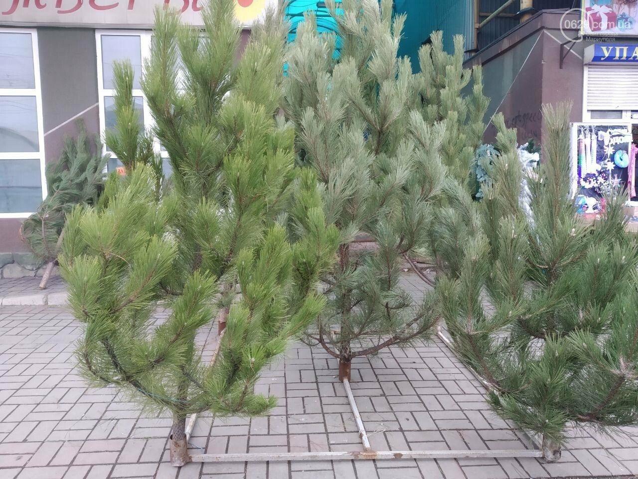 На Херсонщине уже продают новогодние сосны