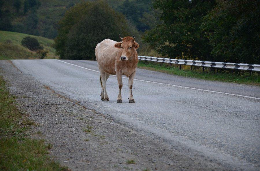 Аварию на Херсонщине спровоцировала корова