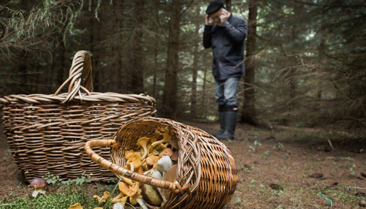 На Херсонщине 10 грибников заблудились в лесу