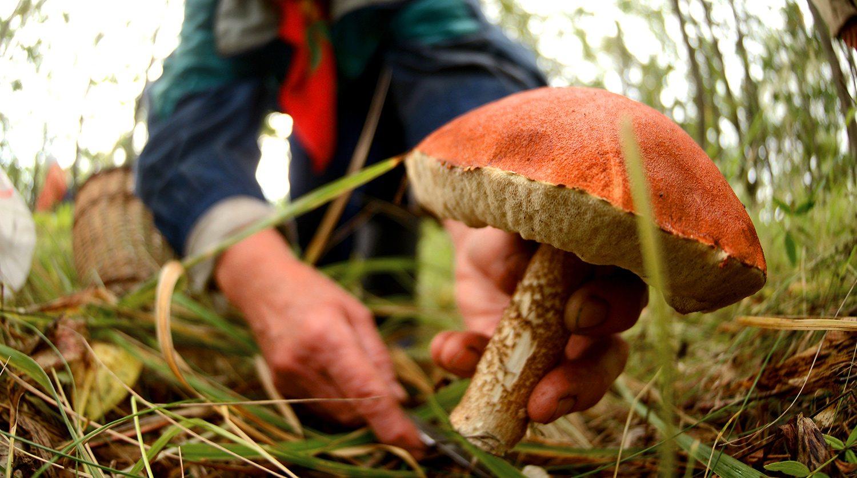 Мать и двое детей отравились грибами на Херсонщине