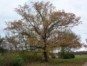 Осенняя рапсодия в заповеднике на Херсонщине