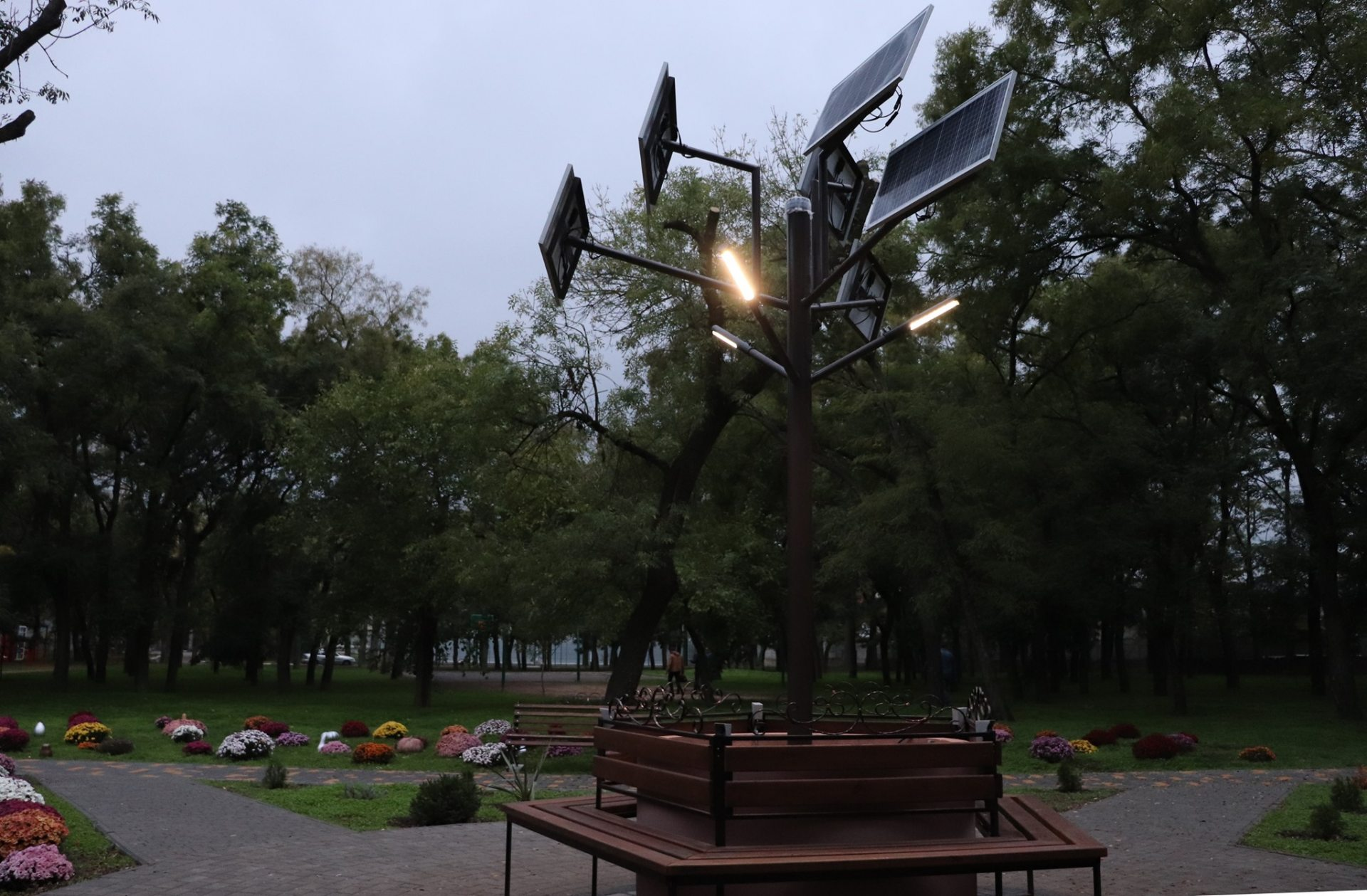 В парке Херсонского университета выросло солнечное дерево