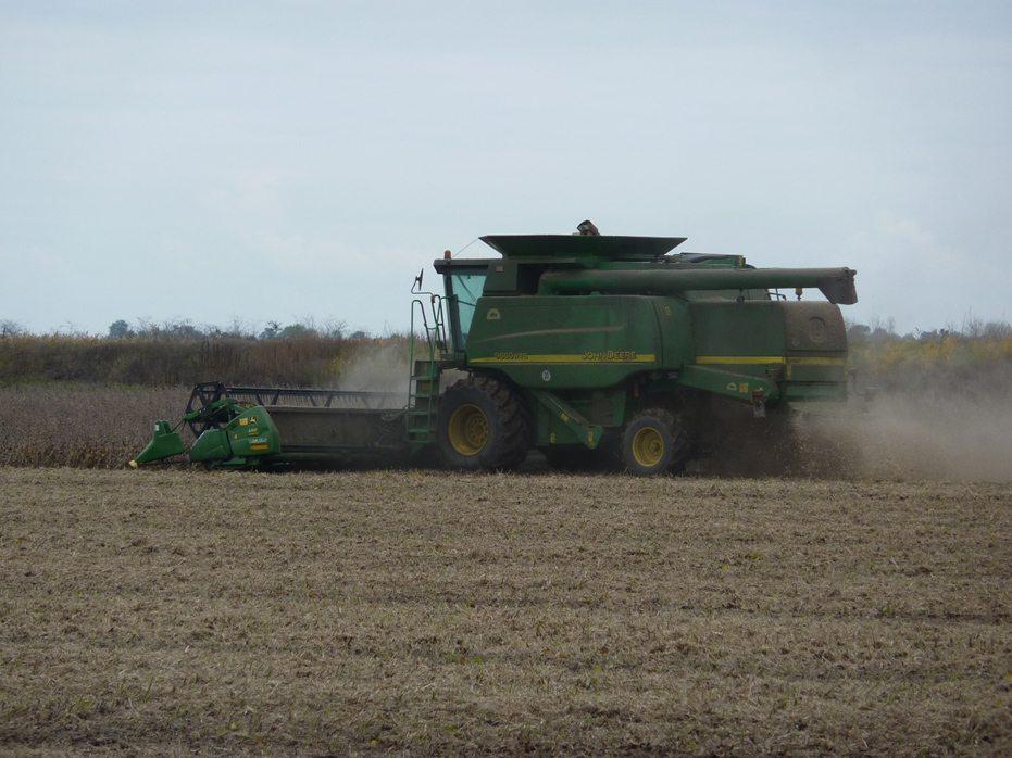 Аграриям Херсонщины приходится выбирать между рисом и рапсом