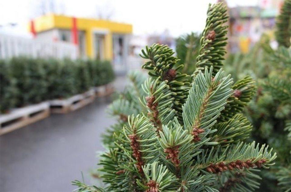 В Херсоне продажа новогодних елочек пока под вопросом