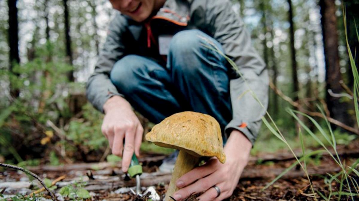 На Херсонщині чоловік отруївся грибами
