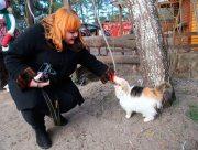 Кошачьи истории херсонской журналистки